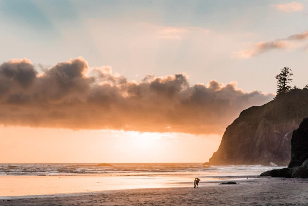 ruby beach elopement scouting sunset olympic national park