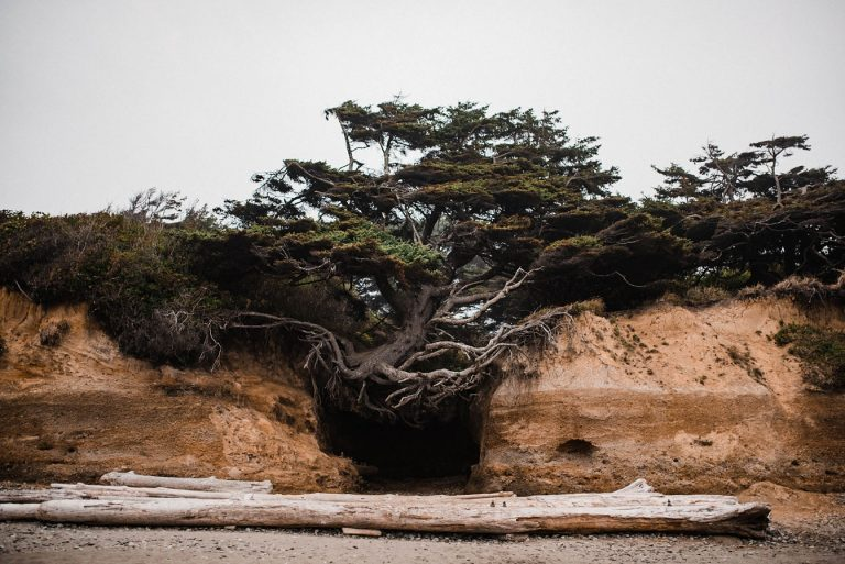 kalaloch tree of life where to elope in washington state