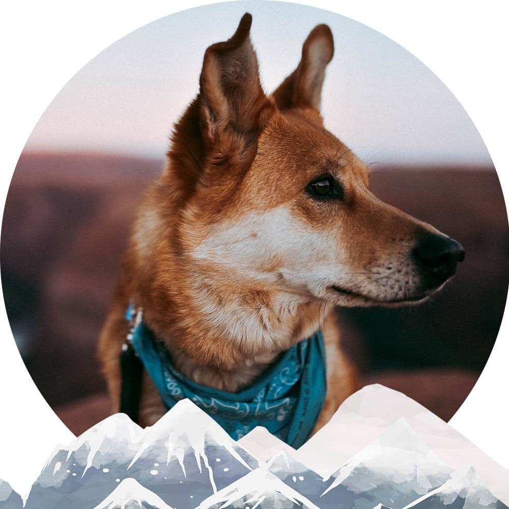 Aiko Fox adventure dog