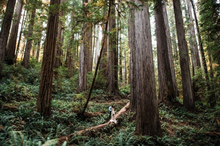 Best places to elope in california redwoods national park