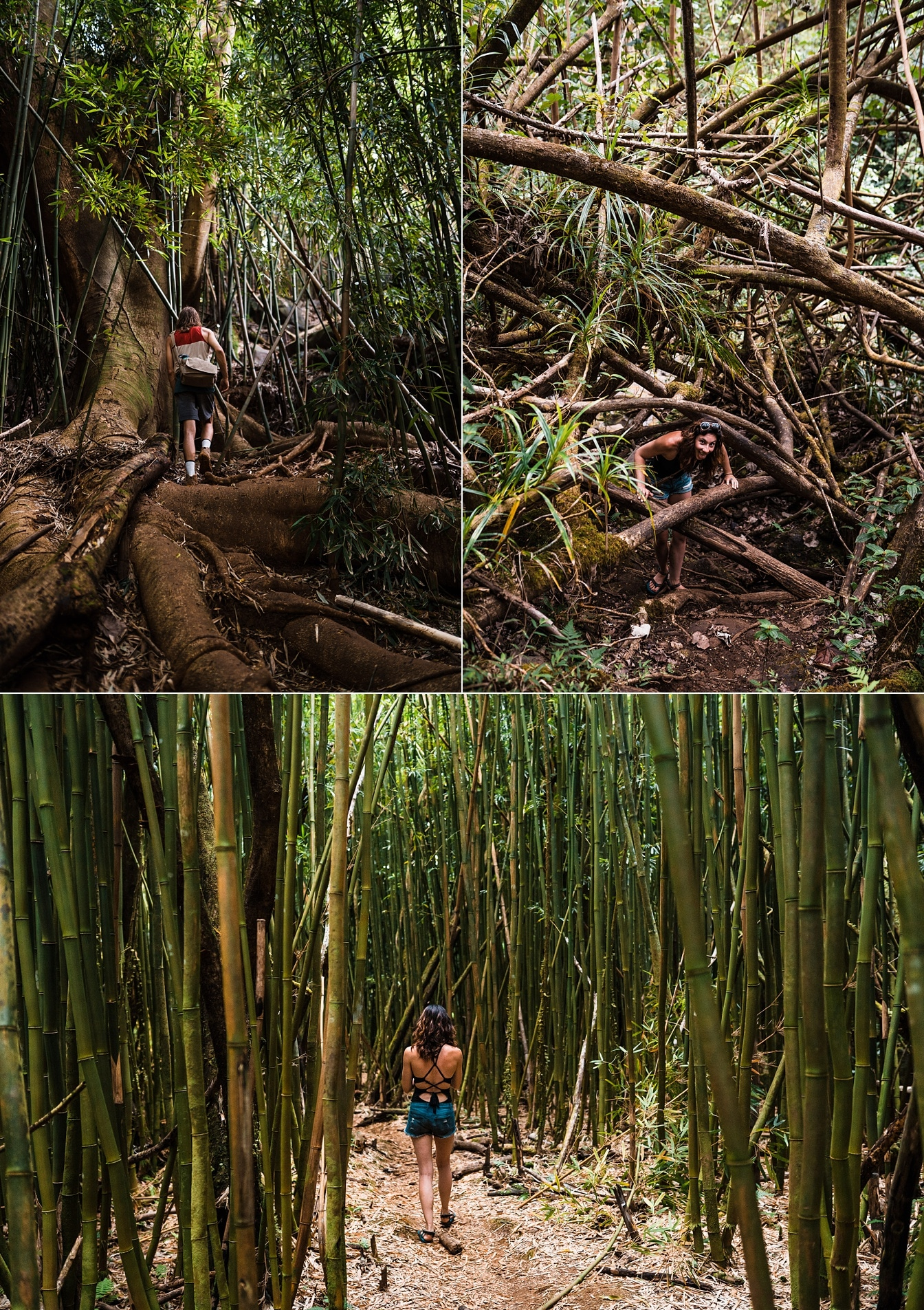 Kauai jungle hike bamboo forest
